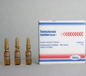 Testosterone enantato Norma 250mg/amp
